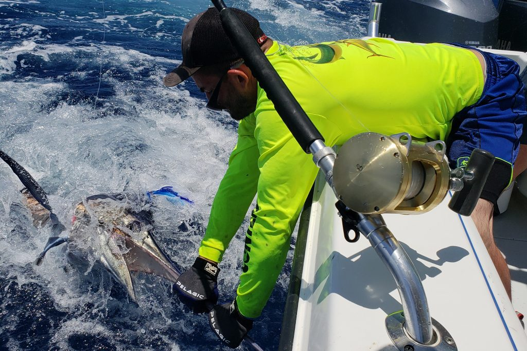 An angler holding a Blue Marlin alongside his boat before releasing it
