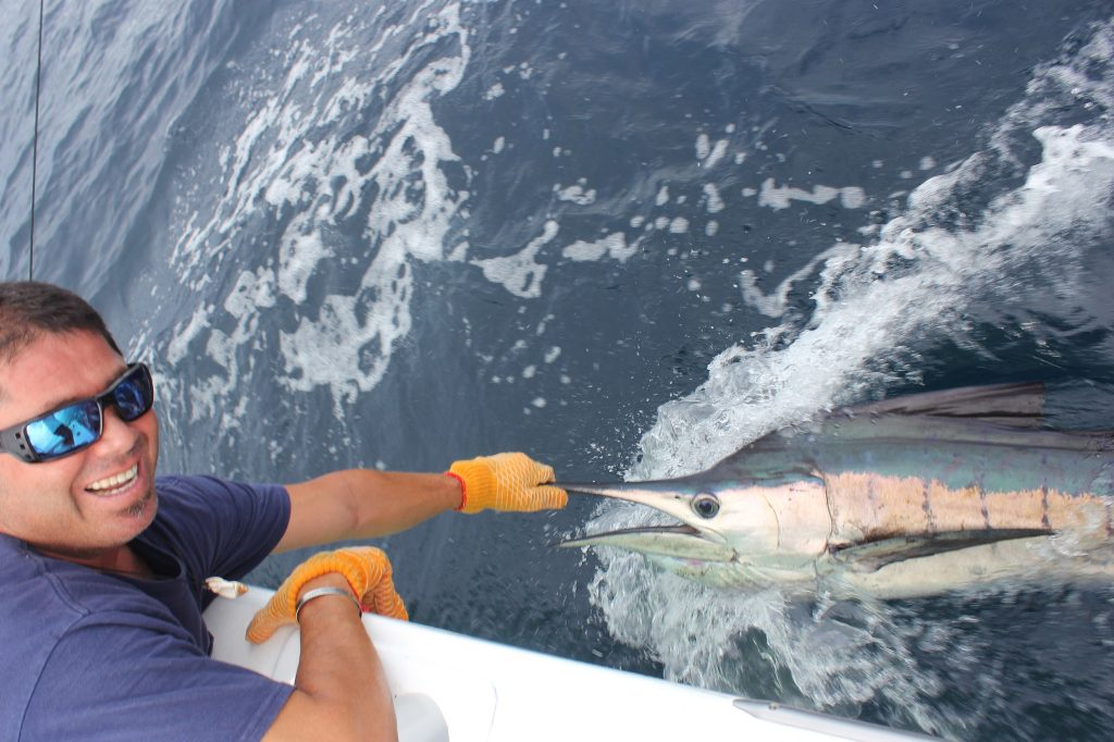 Marlin Fishing: The Complete Guide