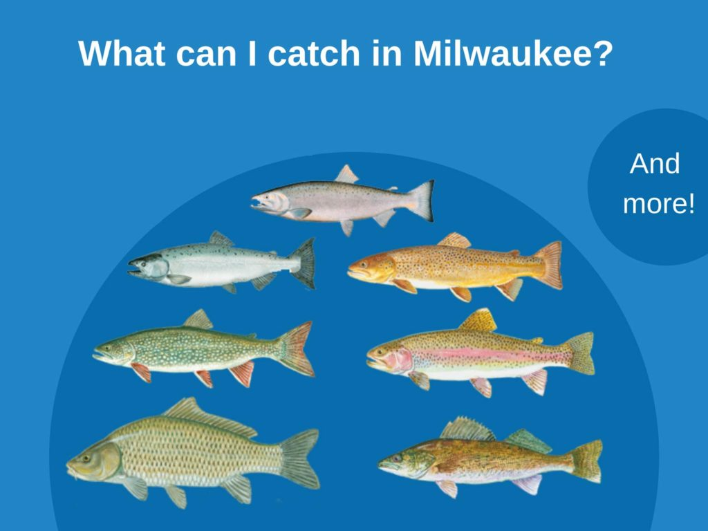 Infographic showing top catches in Milwaukee, including Chinook Salmon, Coho Salmon, Brown Trout, Lake Trout, Steelhead, Carp, Walleye, and more