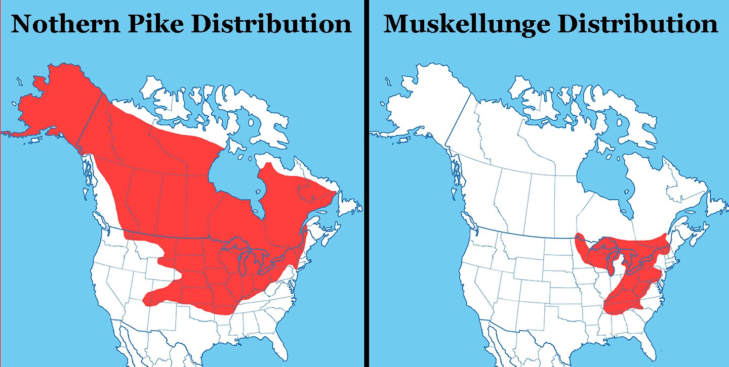 Maps of North America showing the distribution of Muskie vs Pike. Northern Pike is on the left, Muskellunge is on the right.