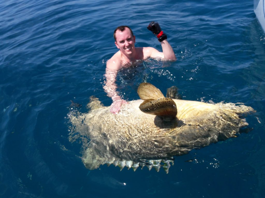 A fisherman in the water along side his catch, huge Goliath Grouper