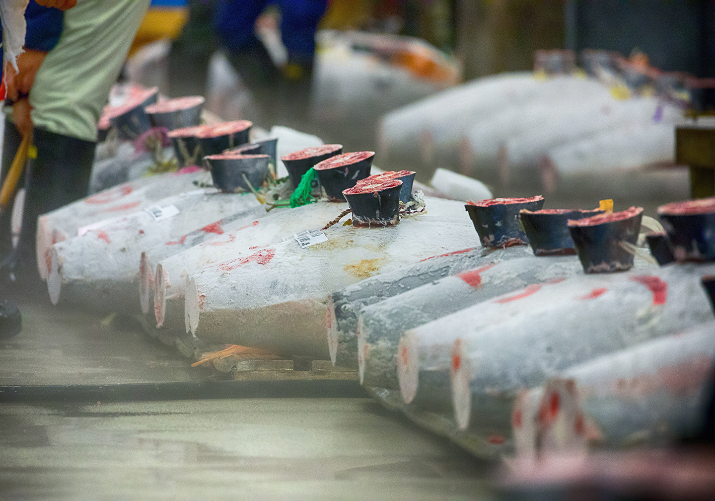 Frozen Tuna with their tails cut off fish lined up at an industrial fish market