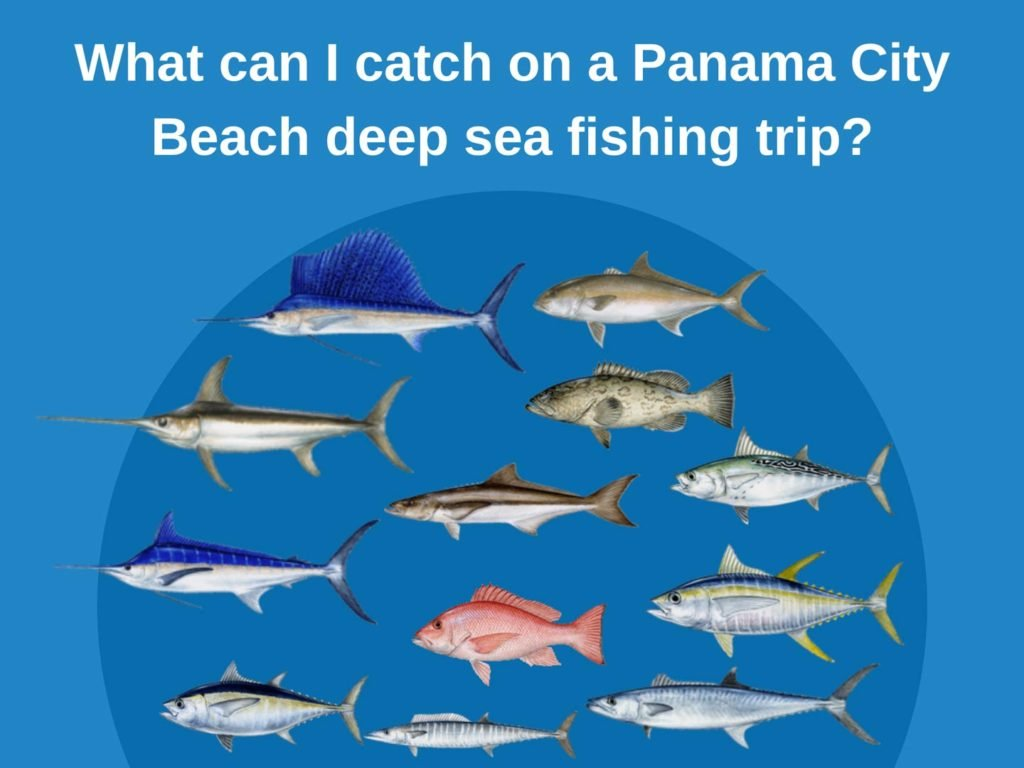An infographic showing the top fish species in Panama City Beach, including Marlin, Sailfish, Swordfish, Tuna, Wahoo, Cobia, Red Snapper, and Gag Grouper