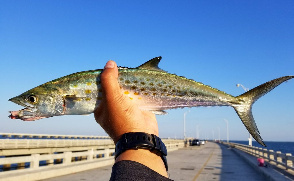 A hand holding a Spanish Mackerel with a pier in the background