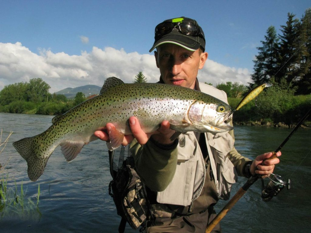 An angler holding a Rainbow Trout in the water