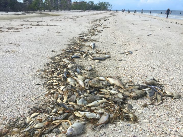 Dead fish washed up on a beach