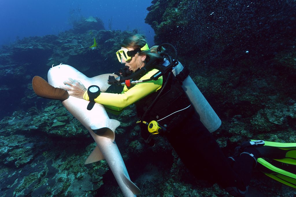 A scuba diver putting a Shark into a trance by turning it upside down and petting its belly