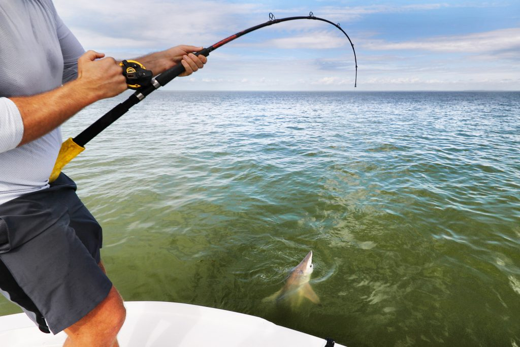 An angler on a boat reeling in a Shark