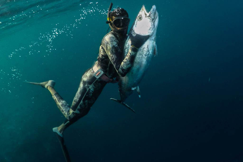 A spearfisher in full gear, holding a Tuna underwater.