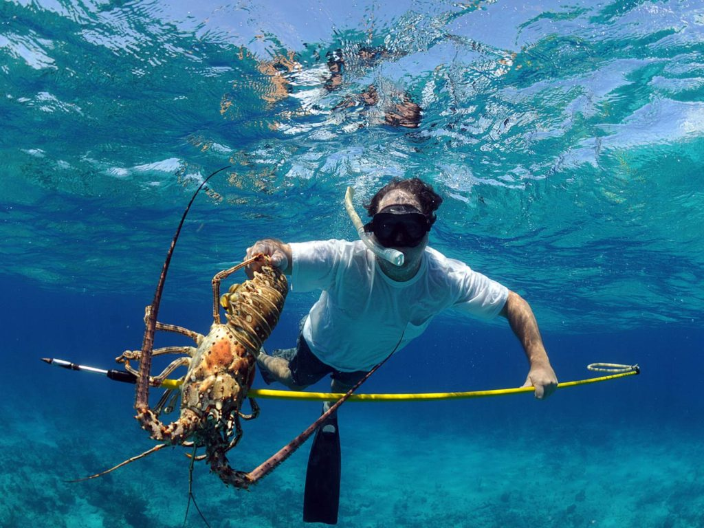 A spear fisherman underwater with a snorkeling mask, holding a lobster he just caught