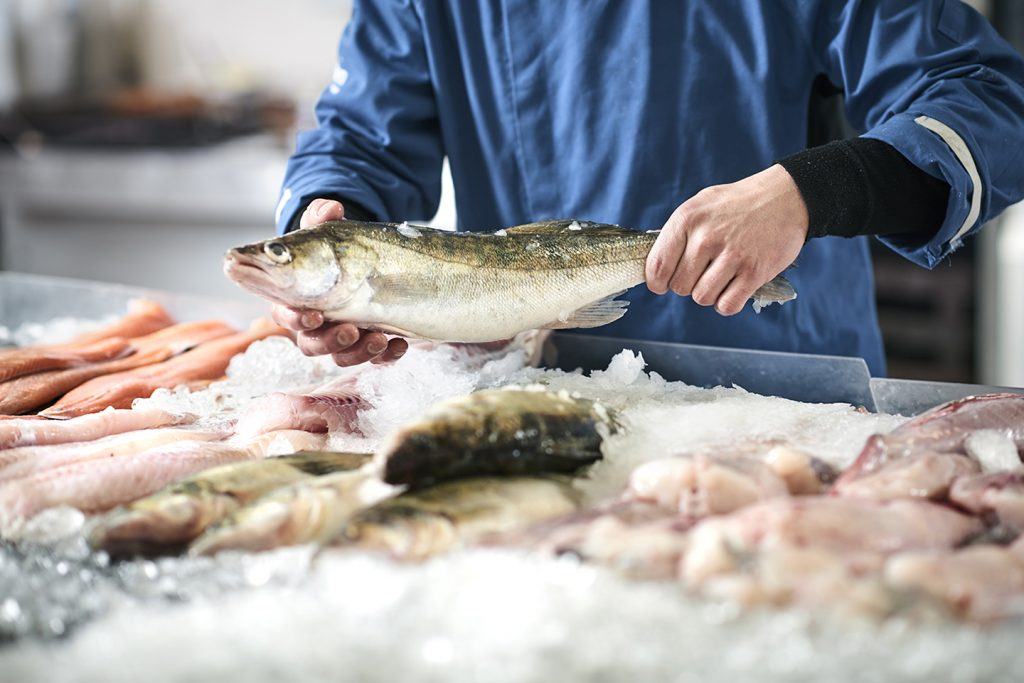 A haddock being held up by a fishmonger in blue overalls. There are several other types of fish lying on ice on the fish counter.