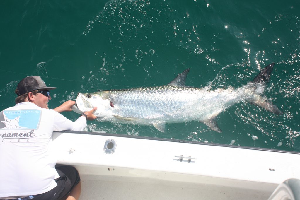 A photo of huge Tarpon in the water, with an angler standing in a boat, holding it by its mouth