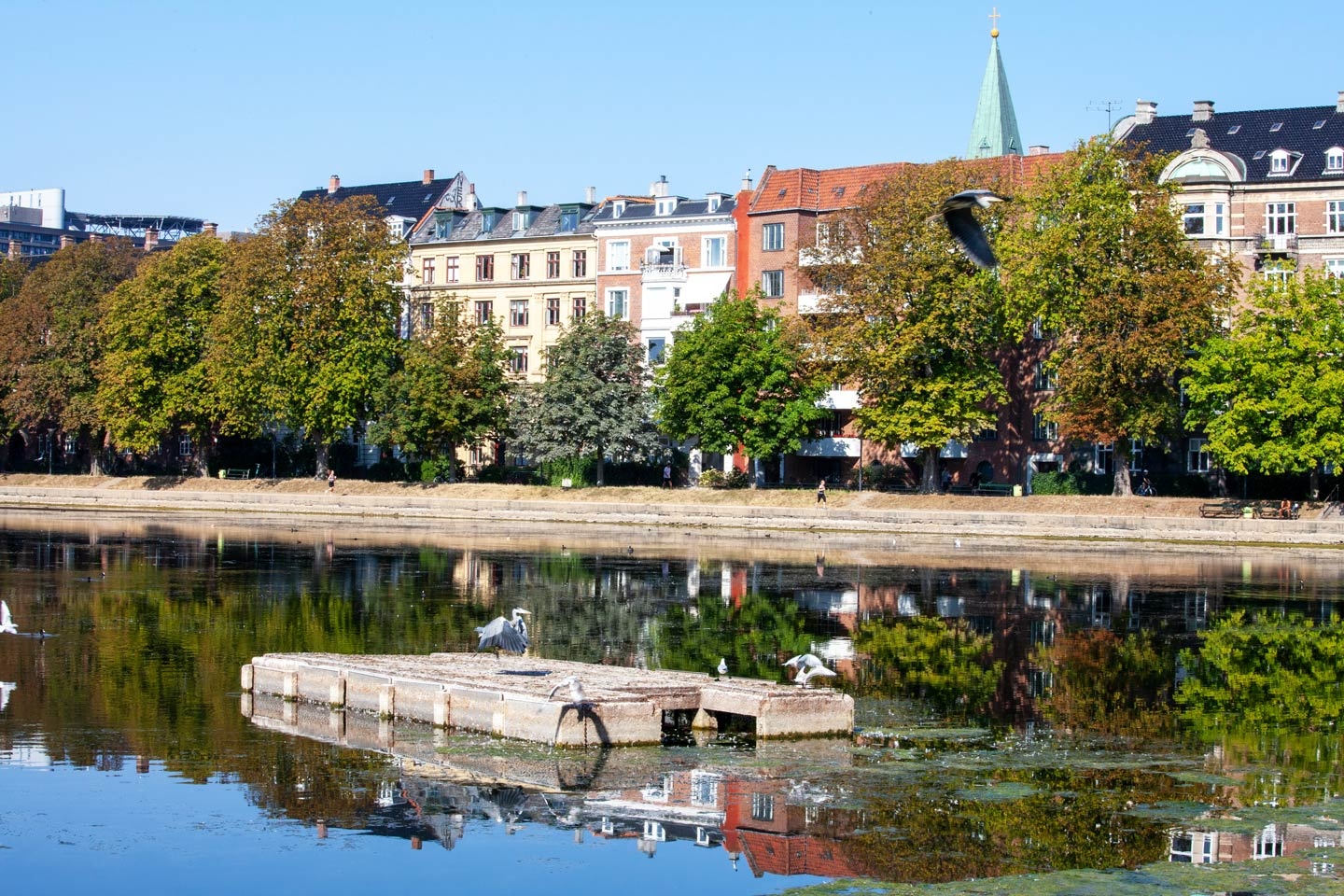 One of the three famous Lakes that sit on the Western edge of central Copenhagen.