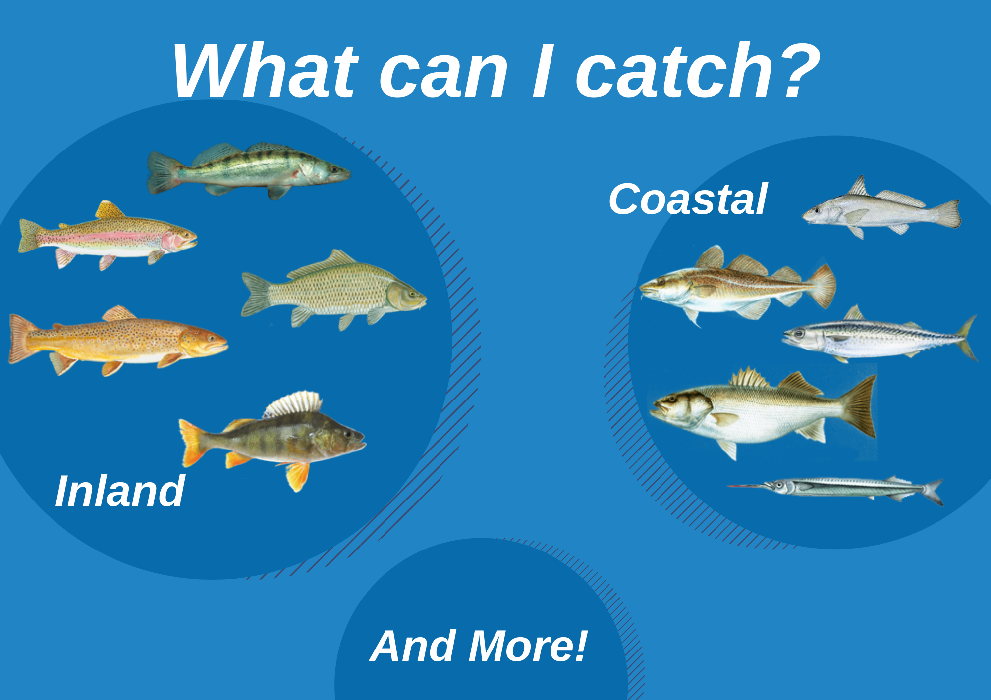 An infographic showing an overview of the top fish species to target in the Netherlands