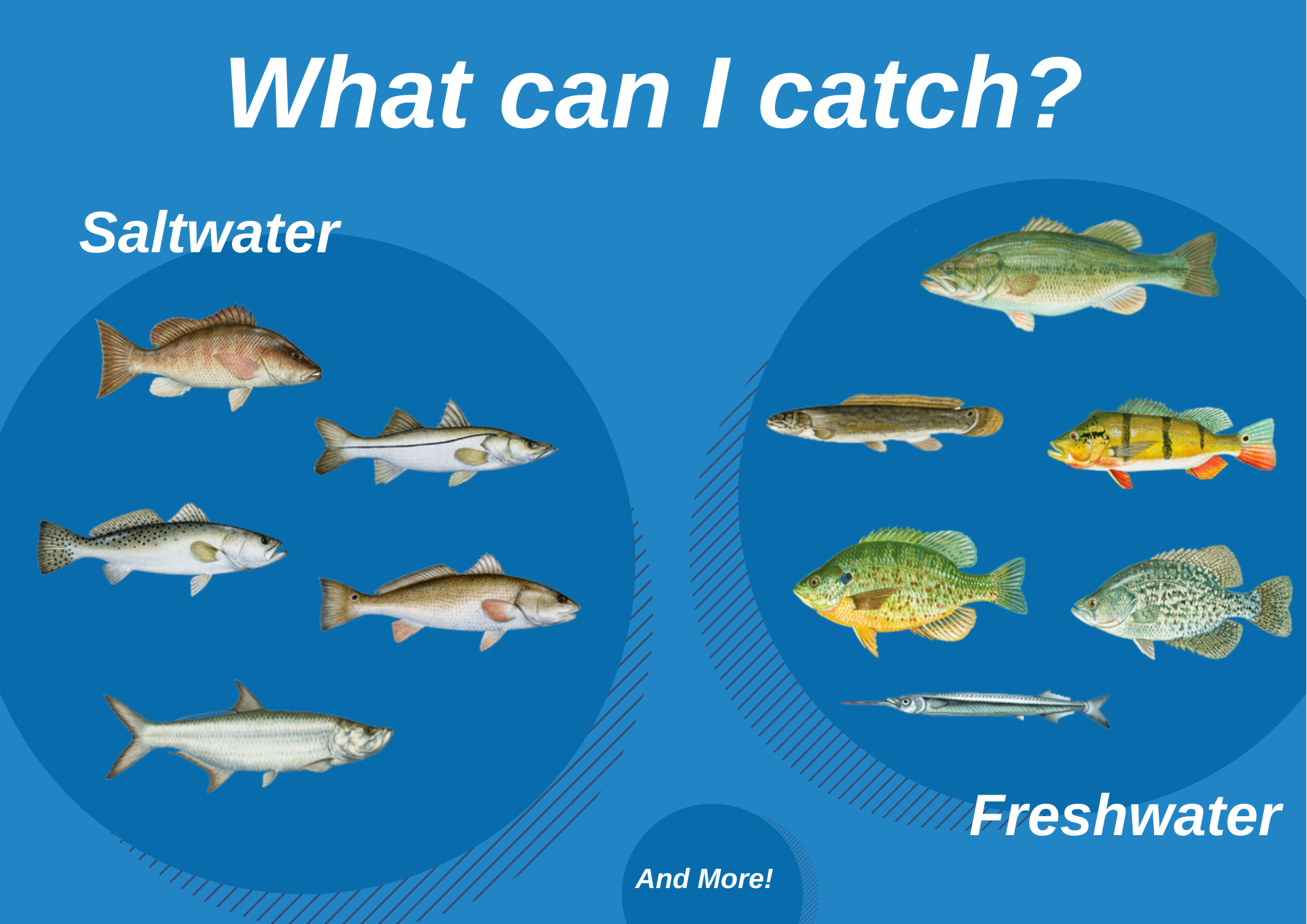 An infographic showing top fish species to target in the Everglades, Florida