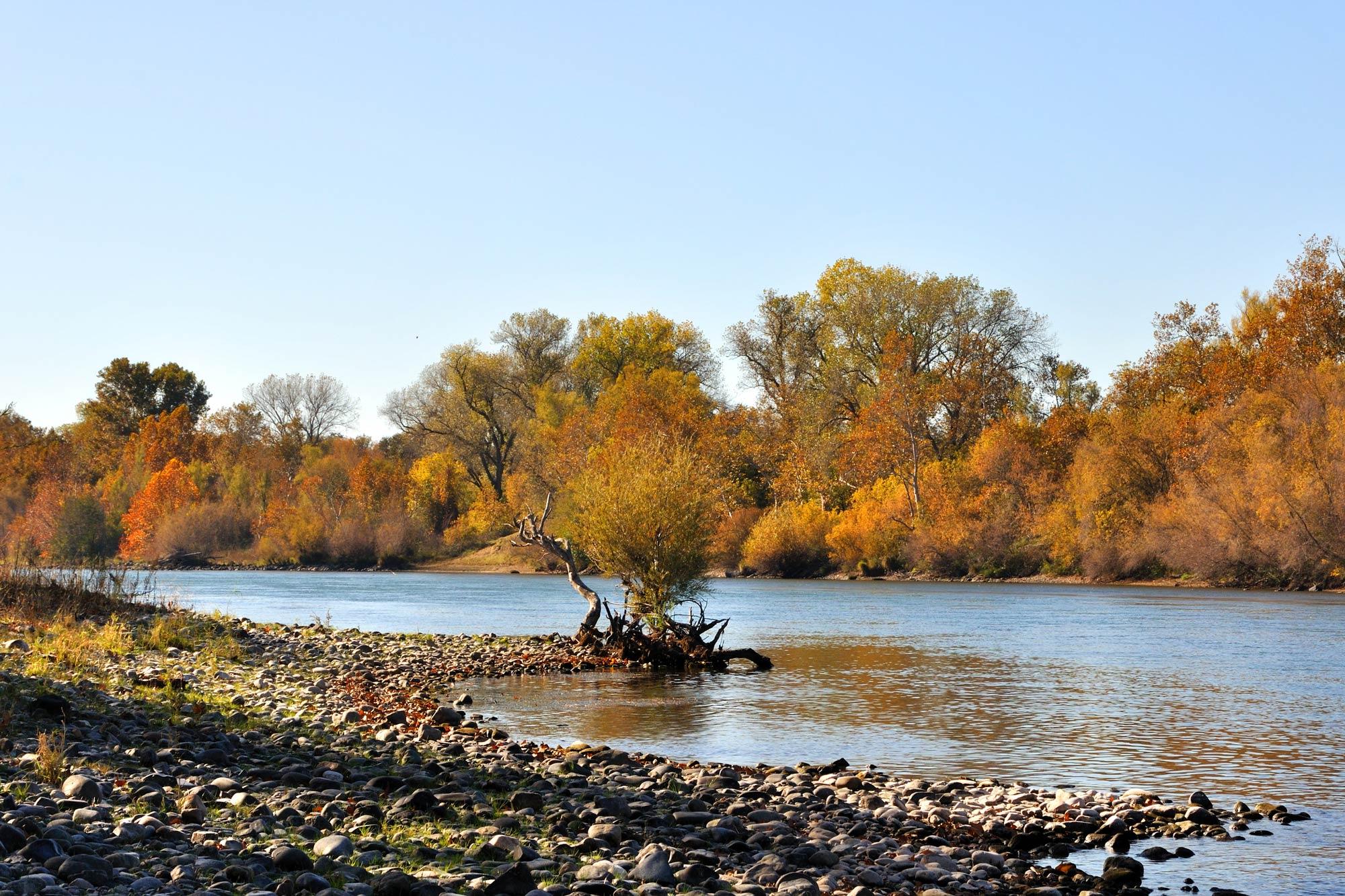 The bank of the Sacramento River in autumn