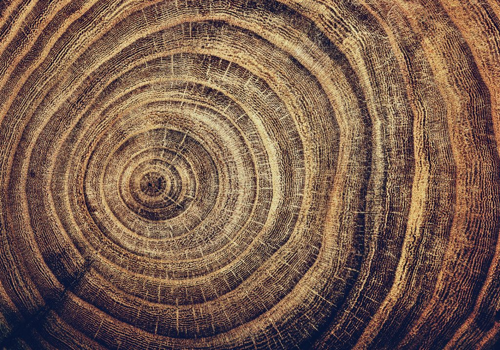 The rings of an old tree