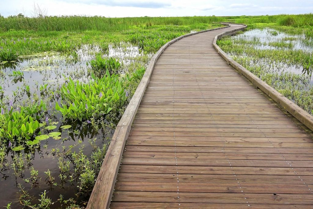 A boardwalk running through Southern Louisiana's famed Creole Nature Trail.