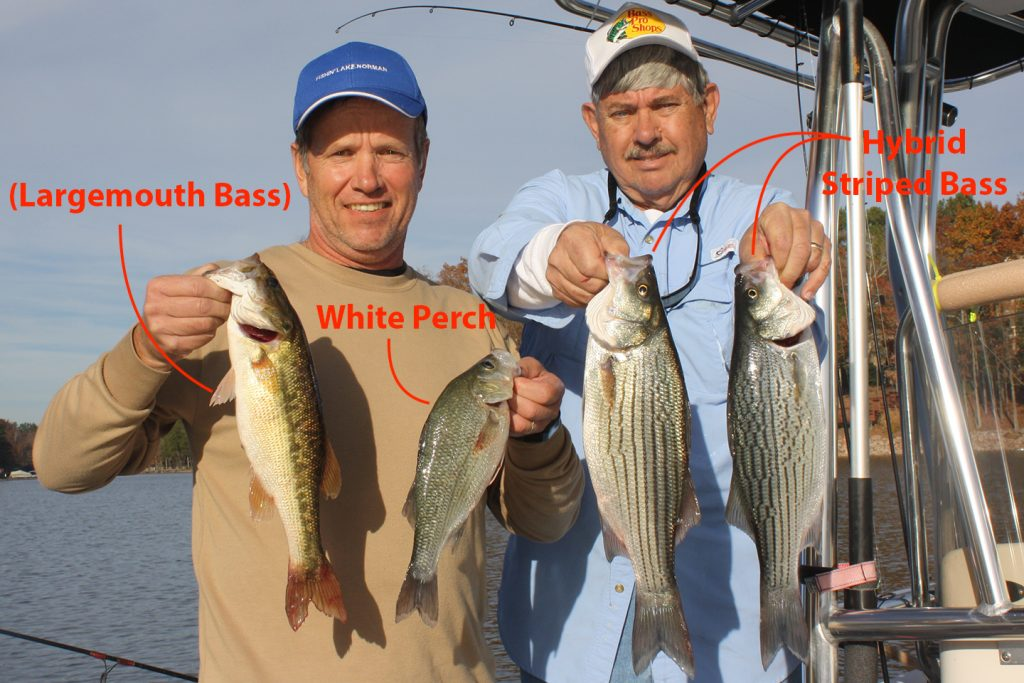 Two anglers holding up fish on a boat. The angler on the left is holding a Largemouth Bass and a White Perch. The angler on the right is holding two Hybrid Striped Bass. Each fish is labeled in red writing.