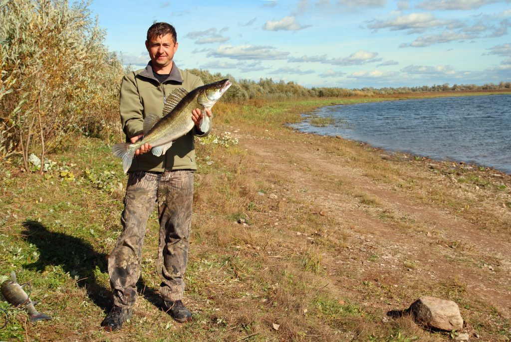 A fisherman standing on the shore holding a Zander