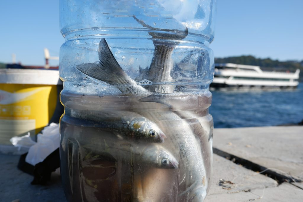 a water bottle full of small bait fish