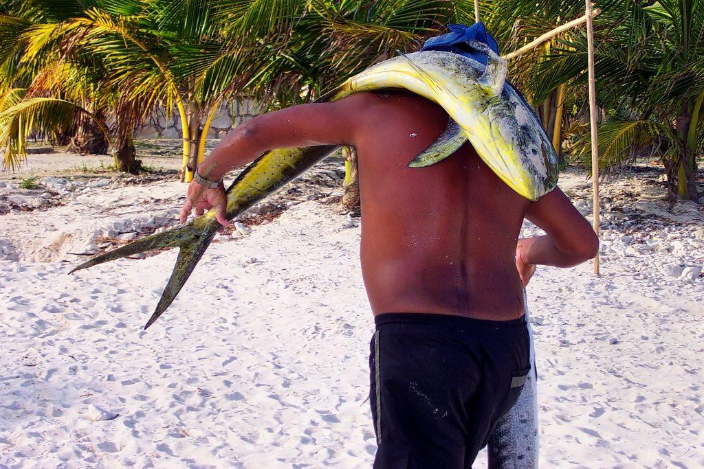 angler walking on a beach, carrying a mahi mahi on his back