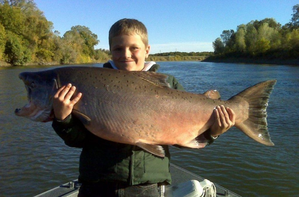 A happy child holding a massive Chinook Salmon
