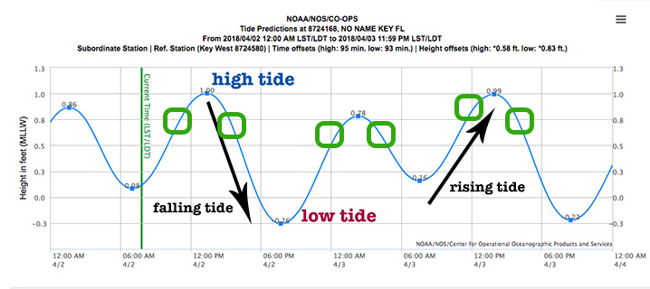 A diagram showing the best tide times for fishing in key west