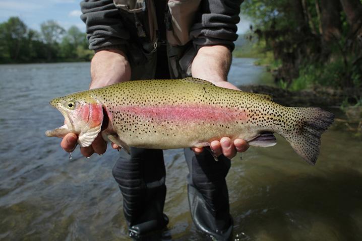 Angler holding Rainbow Trout on Big Lake Arizona fishing trip