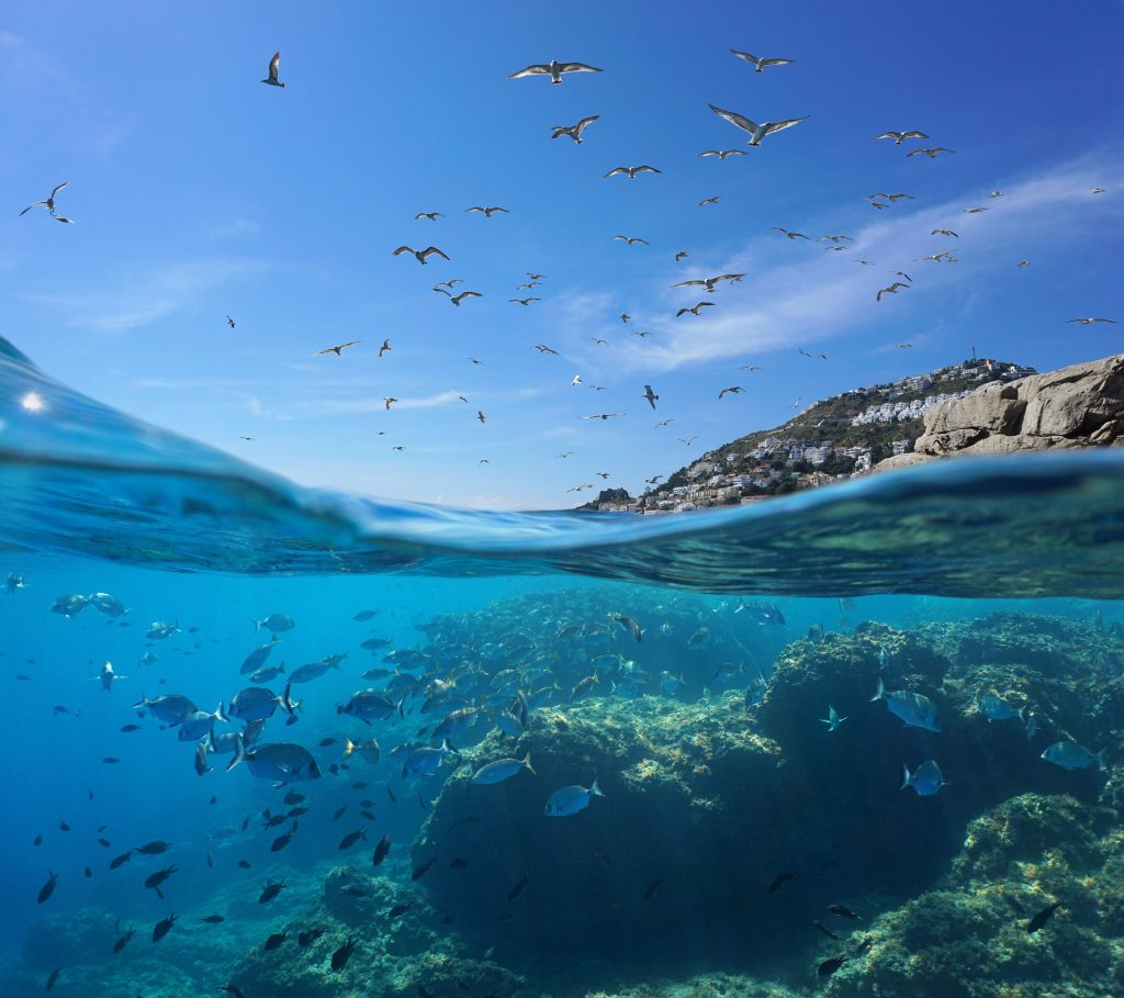 a picture of birds flying over an underwater school of fish
