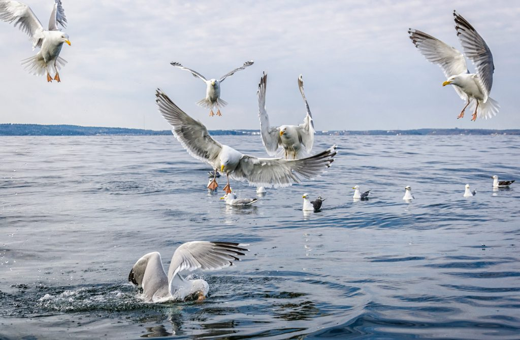 seagulls landing on the surface of the water