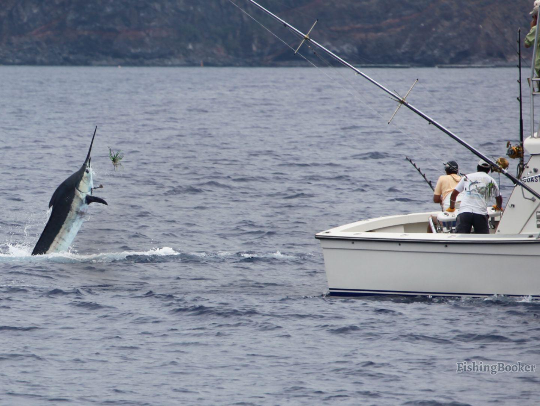 Blue Marlin fishing in Madeira