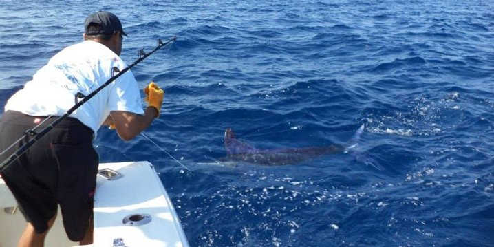 An angler fighting a Marlin on a deep sea fishing trip in Cabo San Lucas. He is leaning over the boat and pulling in the line by hand.