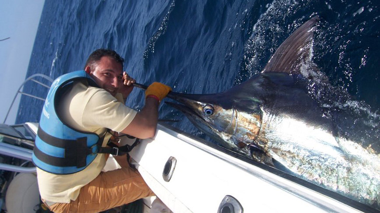 "Marlin C&R aboard ""Big Joe"", Cape Verde"