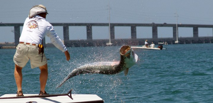 Tampa Bay fishing: Tarpon jumping out of he water