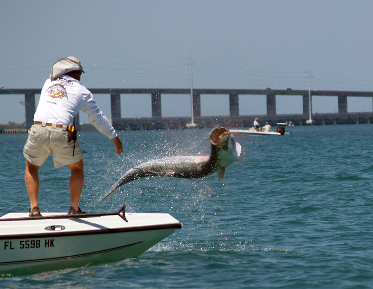 All you need to know about tarpon fishing in florida for Islamorada tarpon fishing