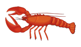 An illustration of a Lobster