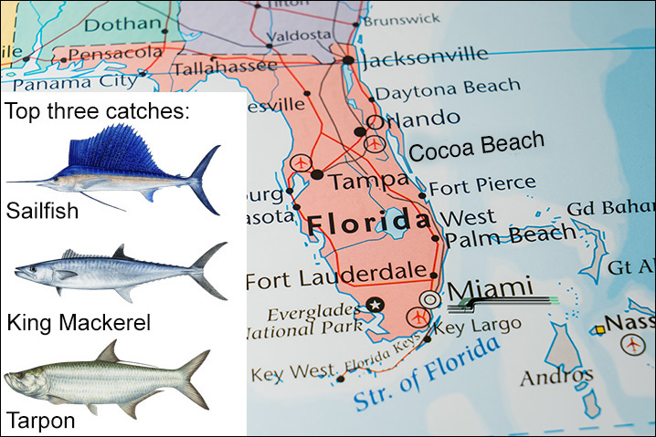 Florida map showing Miami and best fish species to get there including Sailfish, King Mackerel, and Tarpon