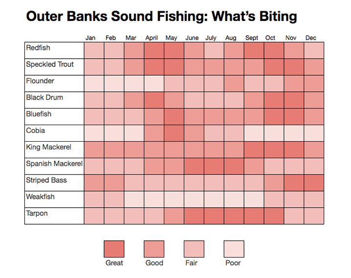 Outer Banks Sound Fishing: Come for the Beach, Stay for the Fish