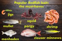 Popular bait and lures for Redfish.