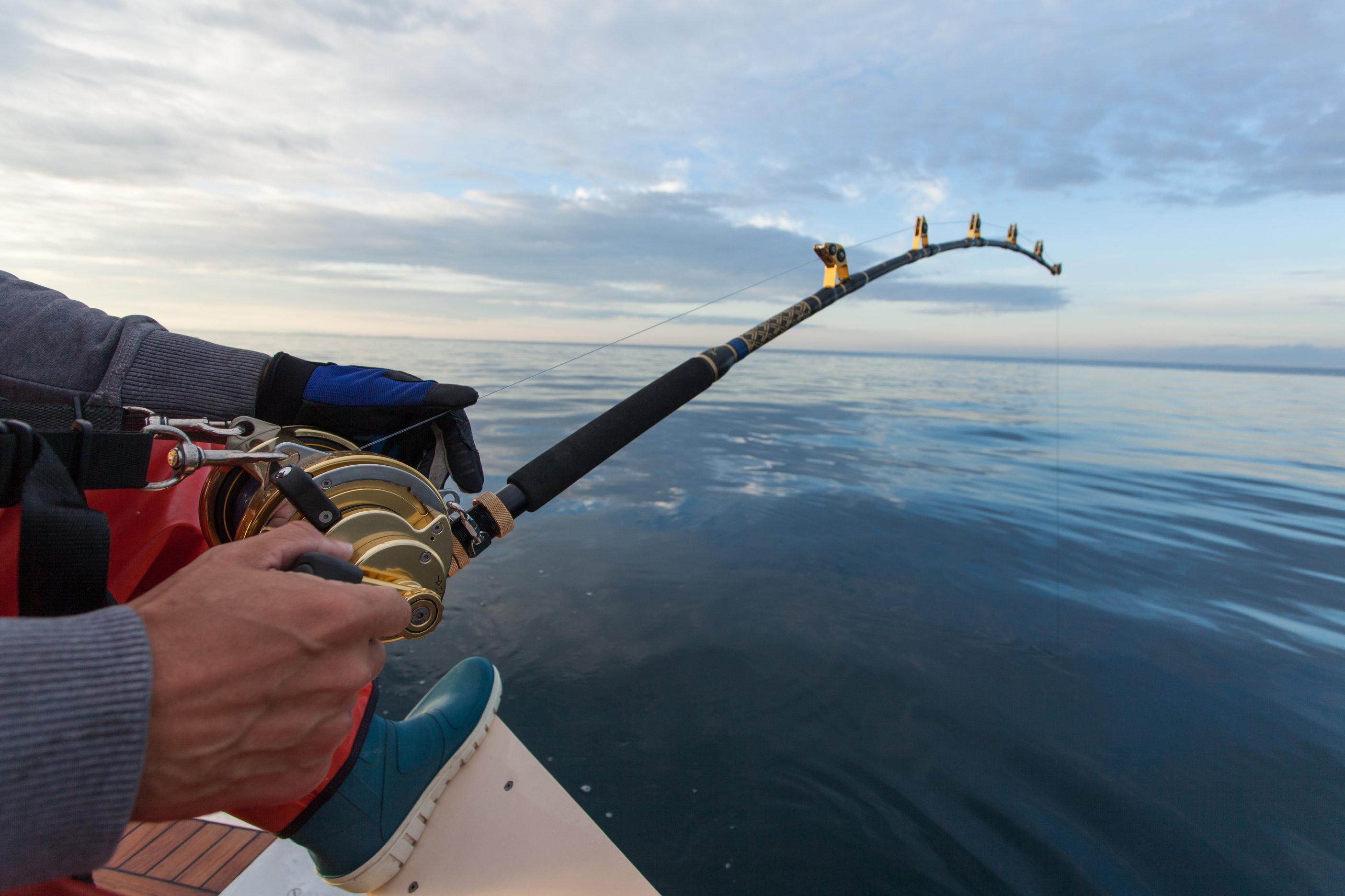 a heavy duty fishing rod