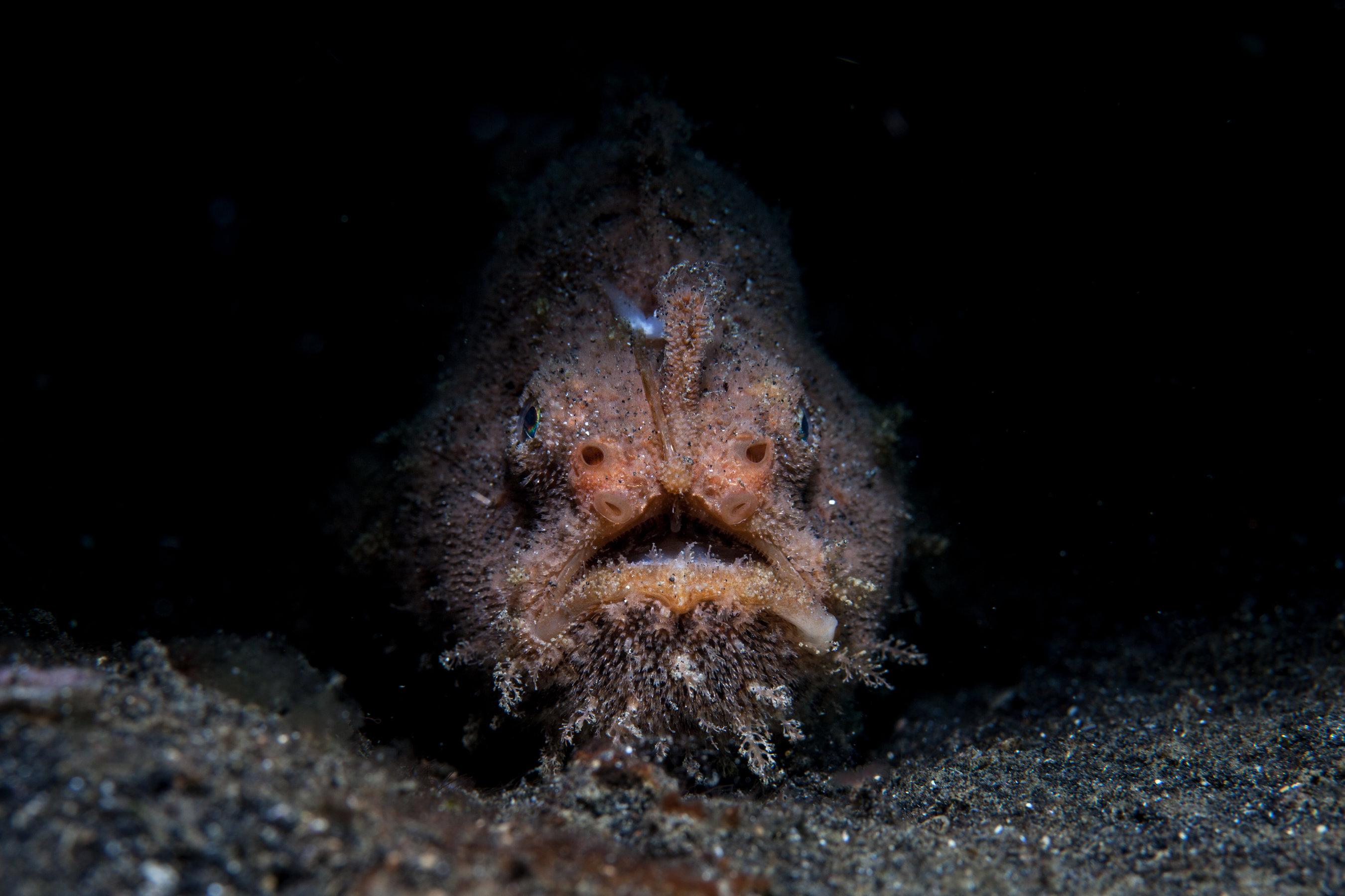 an anglerfish on the bottom of the sea