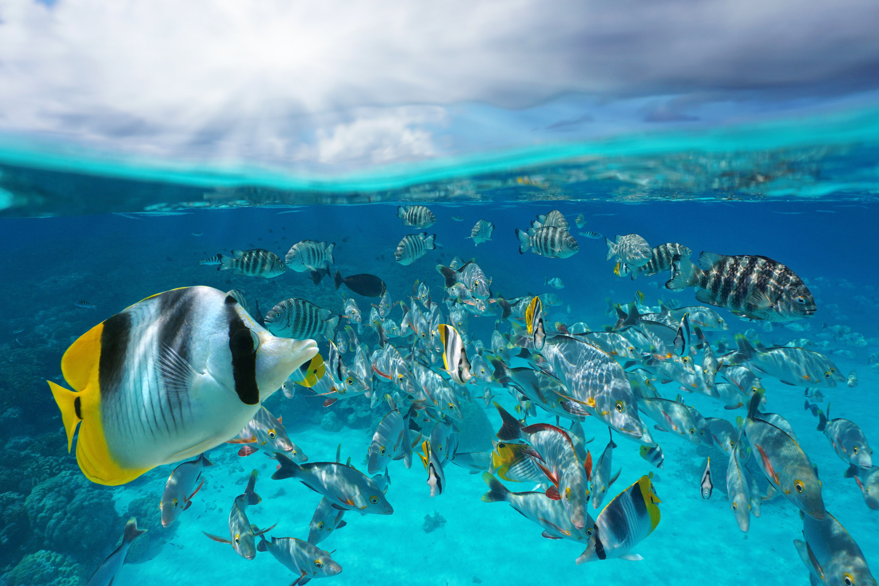a school of different fish swimming near a coral reef