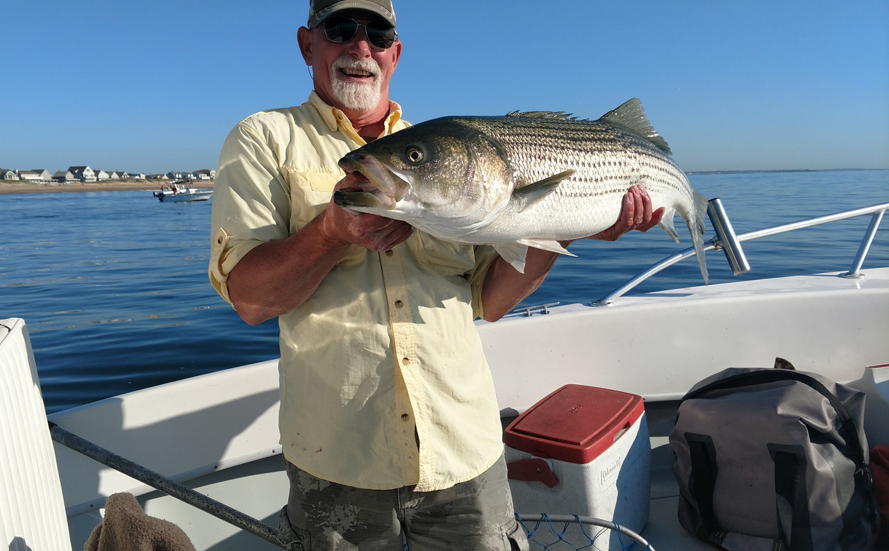 a smiling angler holding a Striped Bass he caught off Gloucester, MA