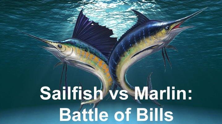 A poster of Sailfish and Blue Marlin under water
