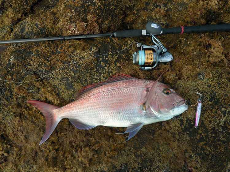 Shore Jigging What Is It And How To Catch Fish With This