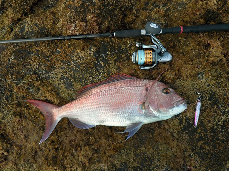 Sjc shore jigging club turkiye for Saltwater shore fishing tips