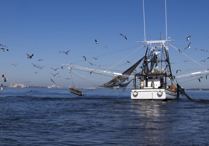 A shrimp trawler boat on the sea with its nets extended and seagull swarming behind it.