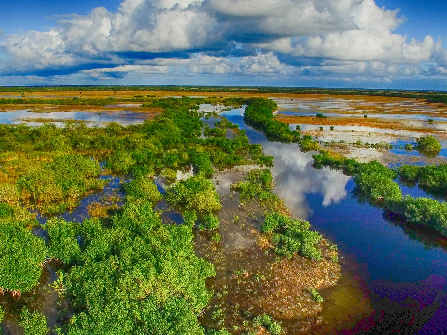 Overhead view of the swamp in the Everglades, Florida