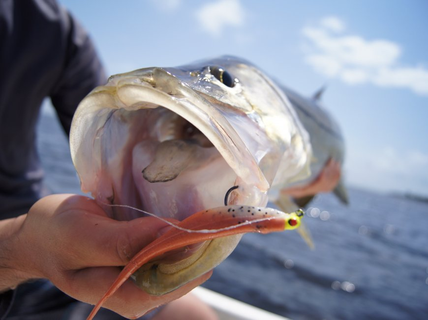 Not That Common After All Everything About Snook Fishing